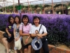 Lavender Garden in Cameron Highlands, 22 - 24 June 2013