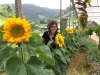 Sunflower Girl, Cameron Highlands, 22 - 24 June 2013